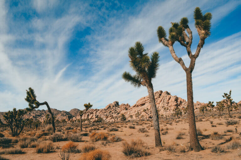 Joshua Tree is one of the best West Coast National Parks