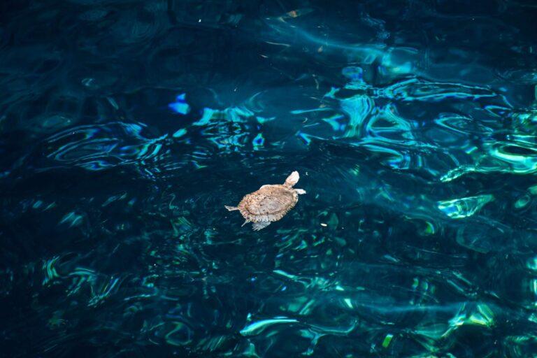 Tulum-Cenotes