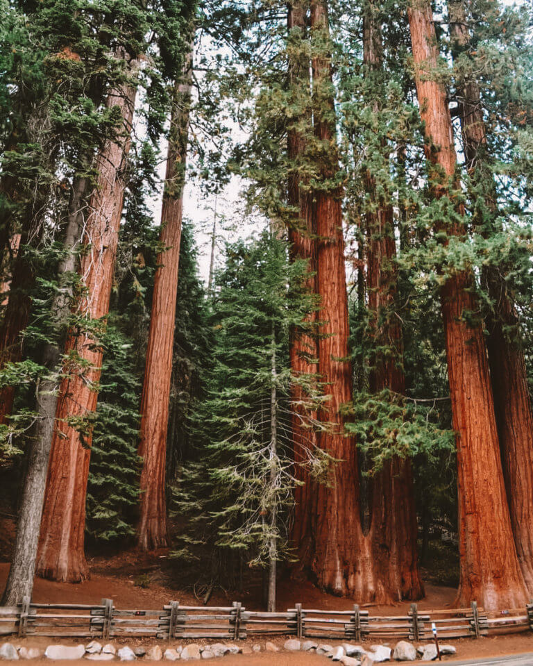 Sequoia National Park is one of the Best West Coast National Parks
