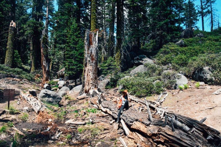 Hiking in Yosemite Valley