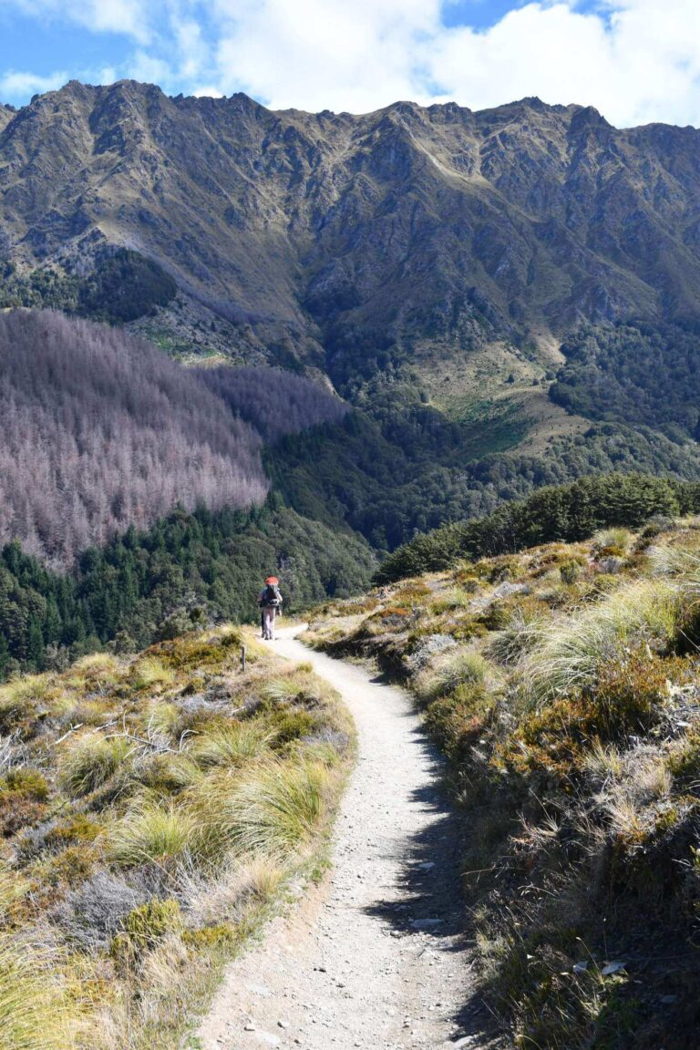 Ben Lomond Hike in Queenstown