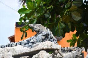 Sian Ka'an: The Biggest Protected Area in Mexico's Rivera Maya