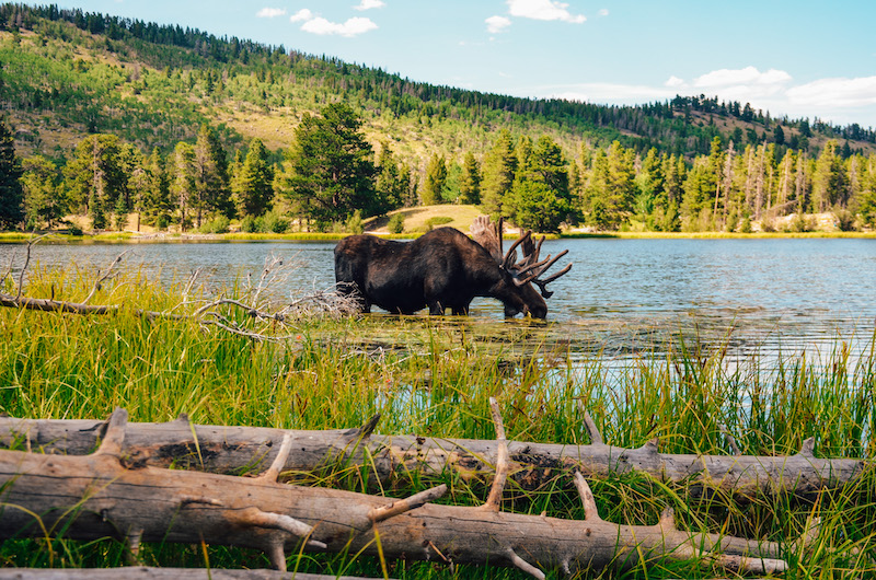 Rocky Mountain National Park is one of the best day trips from Denver