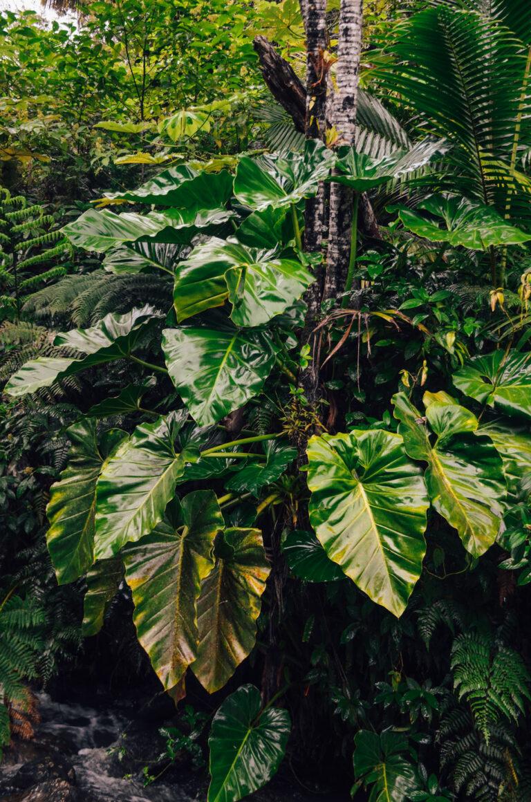 El Yunque National Forest in Puerto Rico